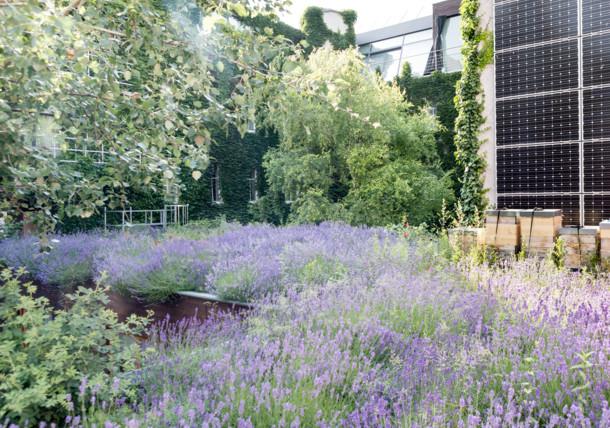 Levendulaültetvény a tetőn, méhkaptárral és napelemekkel