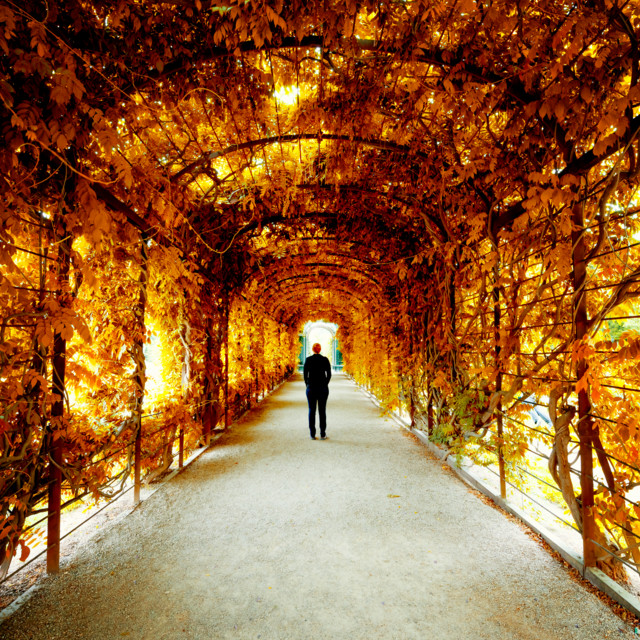 Herbstspaziergang durch den Park Schönbrunn