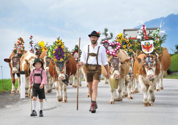 Vader en zoon brengen de koeien naar het dal