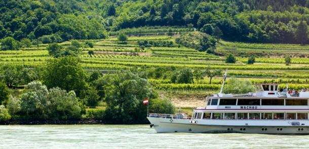 Weingärten in der Wachau