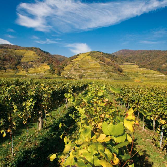 Weinbaugebiet in der Wachau