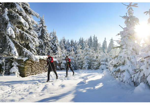 Cross country skiing in the Bohemian Forest