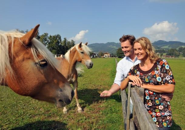 De paarden voeren op de Fohlenhof