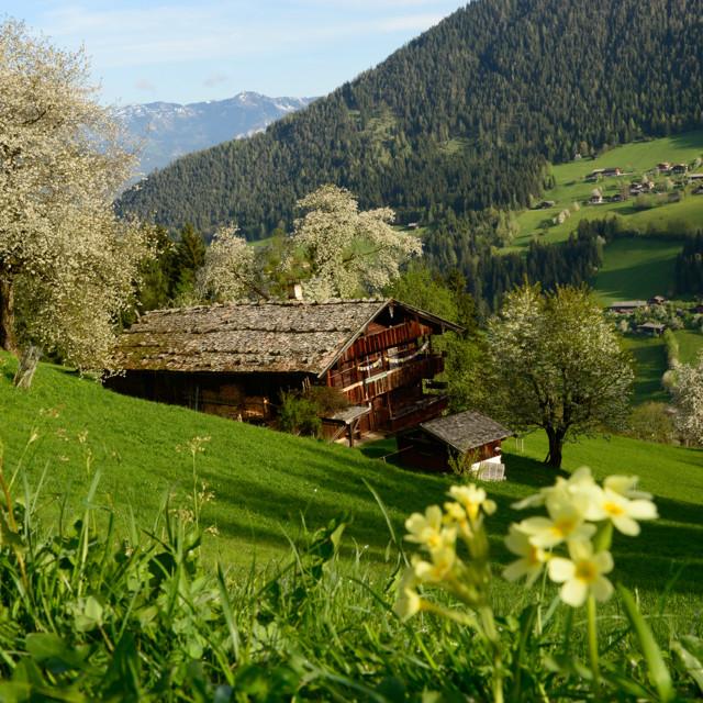 Traumhafte Landschaft im Frühling