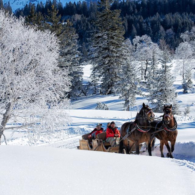 Mit dem Pferdeschlitten durch die Winterlandschaft im Bregenzerwald