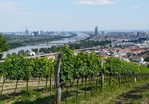 Vineyards in Vienna at the Nussberg