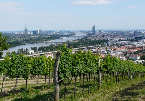 Vineyards in Vienna at the Nussberg