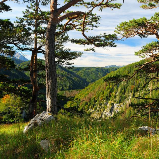 Nationalpark Kalkalpen, Hintergebirge, Oberösterreich