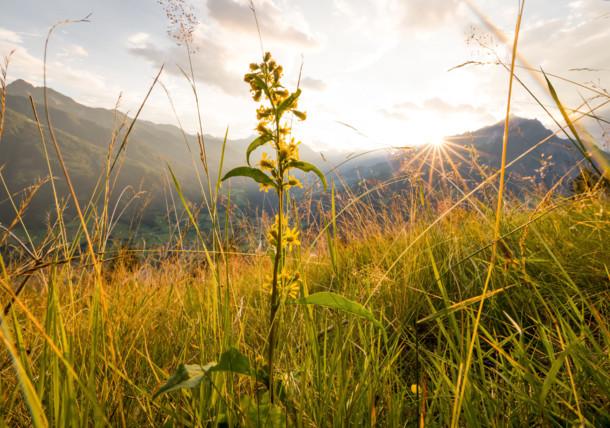 Nature photographs - Austria's flora