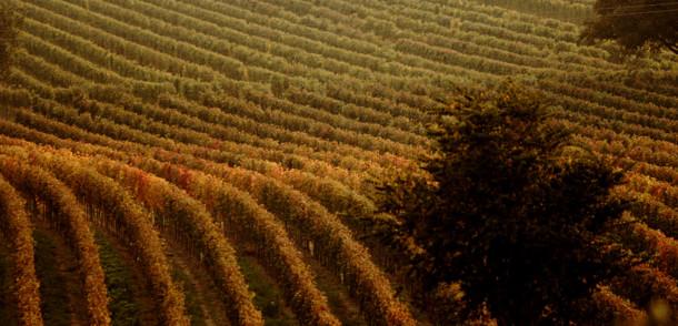 Malerische Weingärten Burgenlands