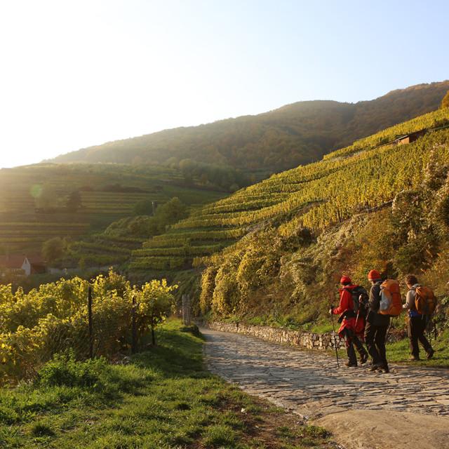 Weinberge in der Wachau