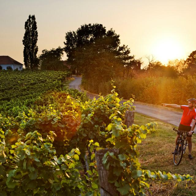 Umgeben von Weinbergen an der Weinland Steiermark Radtour