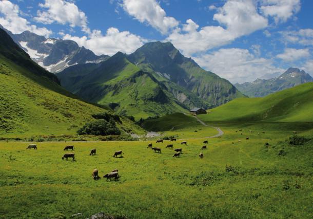 mountain pasture Batzen Vorarlberg