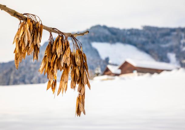 Urlaub am Bauernhof, Winterlandschaft