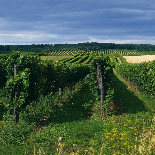 Weingärten im Weinviertel