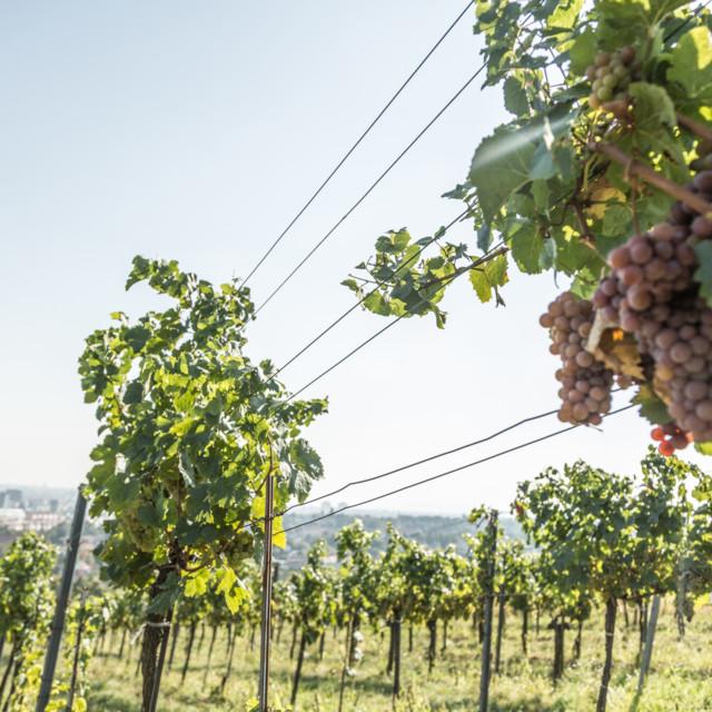 Wiener Weinkultur