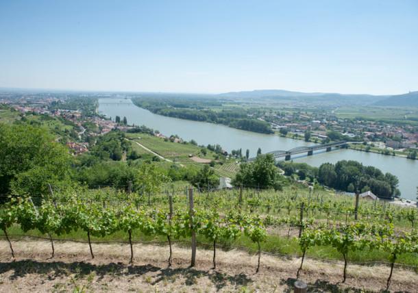 Weingarten bei Krems an der Donau