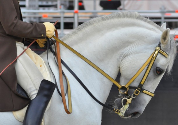 The Lippizaner from the Spanish Riding School