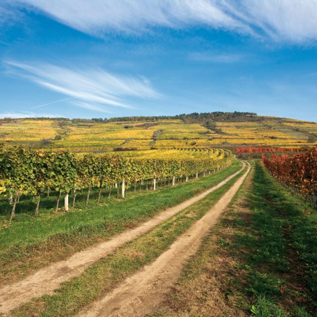 Weinlandschaft bei Langenlois