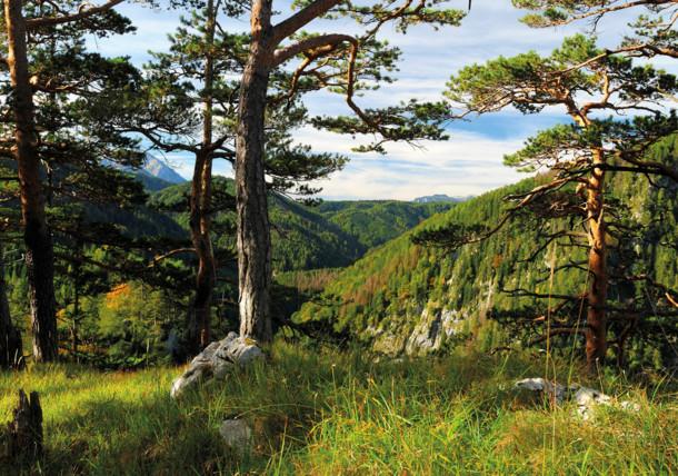 Nacionalni park Kalkalpen