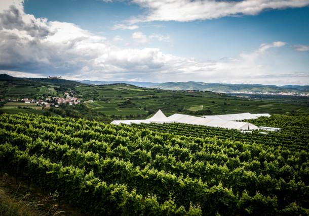 Weingärten in Niederösterreich