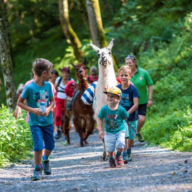 Mit Lamas und Alpakas geht es beim Trekking in jene Gegenden, wo bereits Goldsucher ihr Glück versucht haben