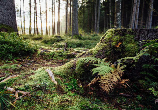 Wald rund um den Egelsee