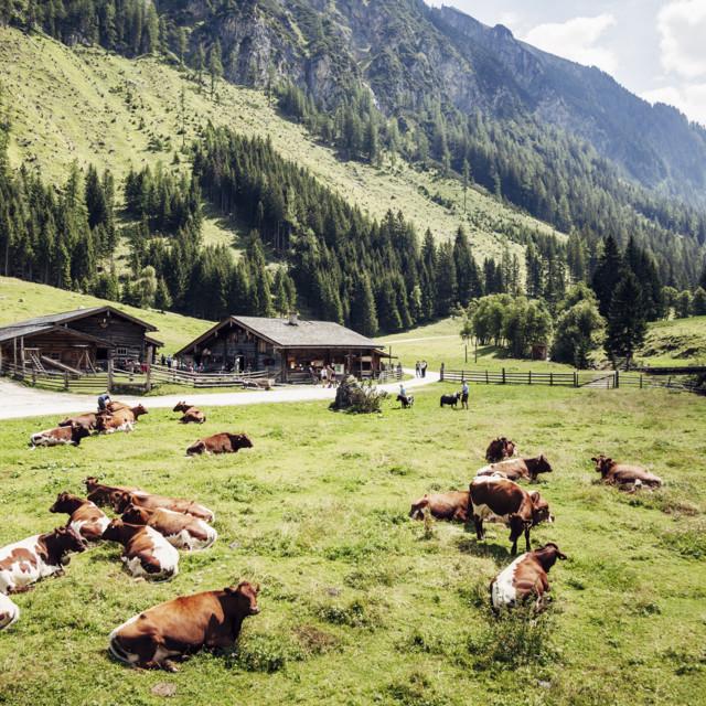 Wiese in der Ferienregion Rauris
