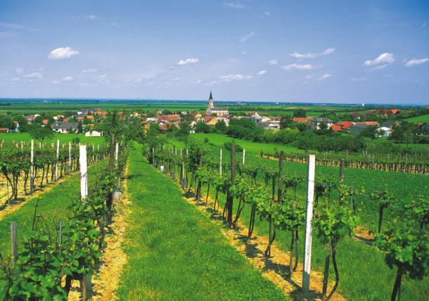 Pole winogronowe w Dolnej Austrii