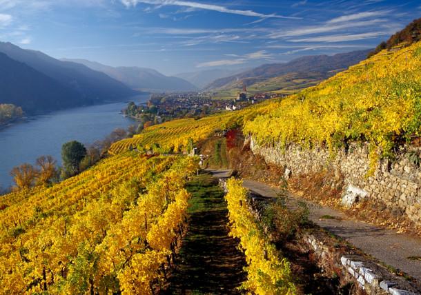 Weinterassen an der Donau