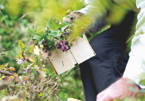 Collecting herbs