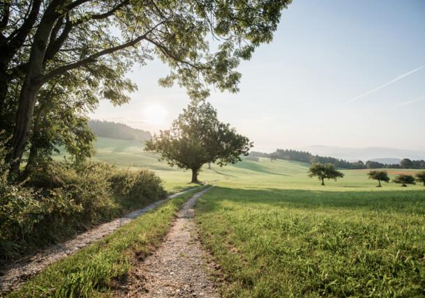 Hop field, Upper Austria